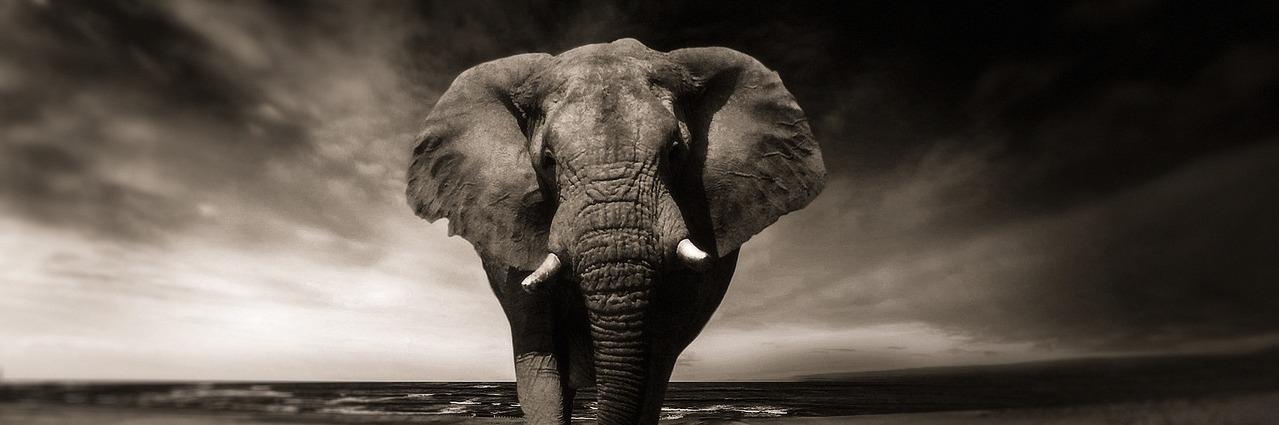Afrikanische Mp3 Musik kostenlos online downloaden